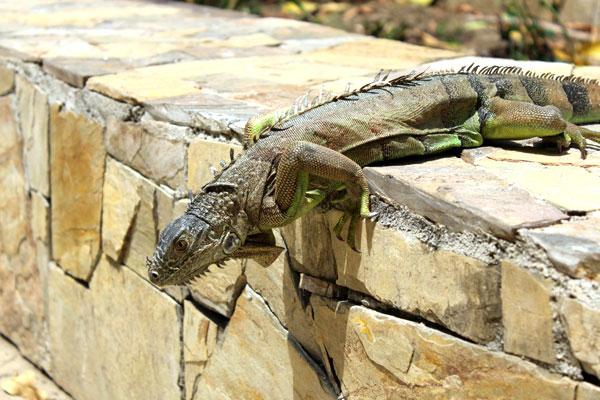 Iguana, Huatulco. Also manual settings.